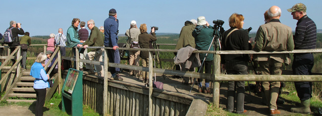 Goshawk spotters at New Fancy Viewpoint