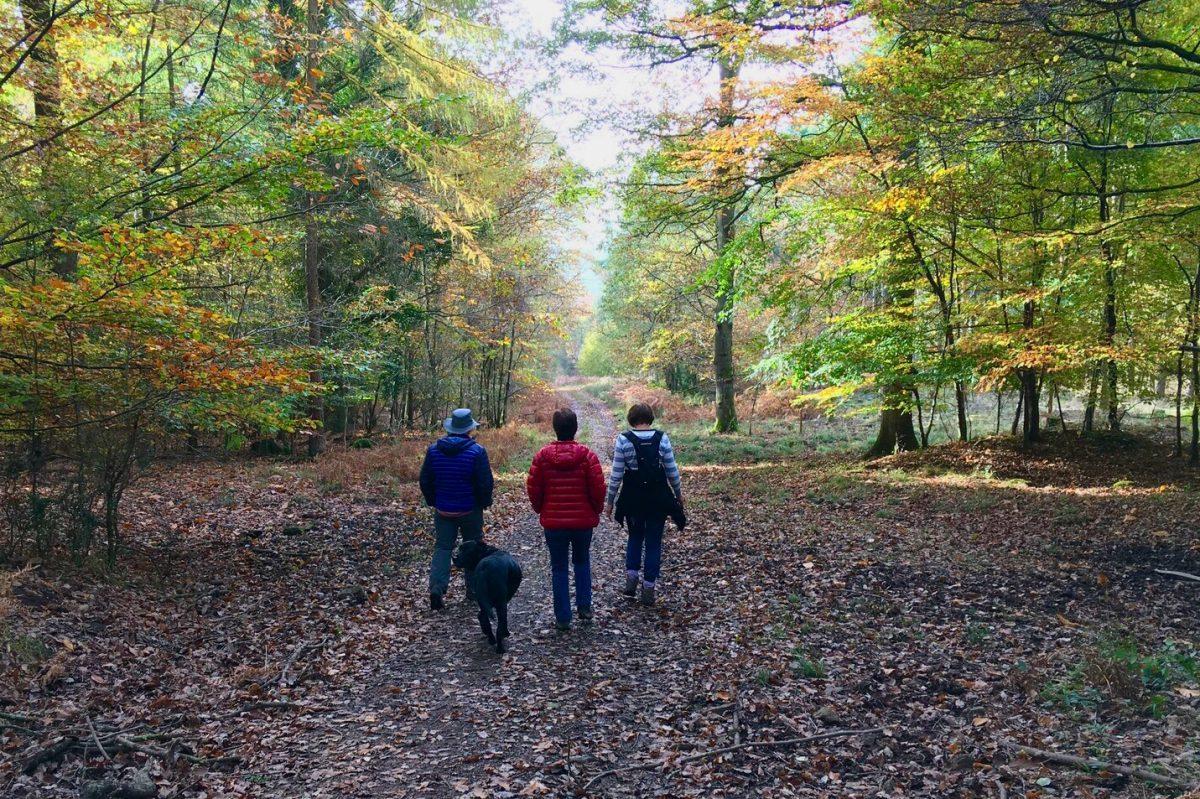 A photo showing Autumn Colours near Parkend