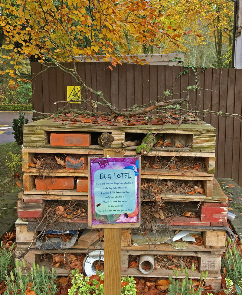 A Robin checks out the Bug Hotel