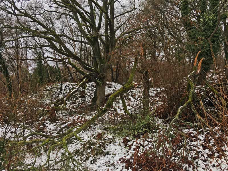 Snow and wind damage trees