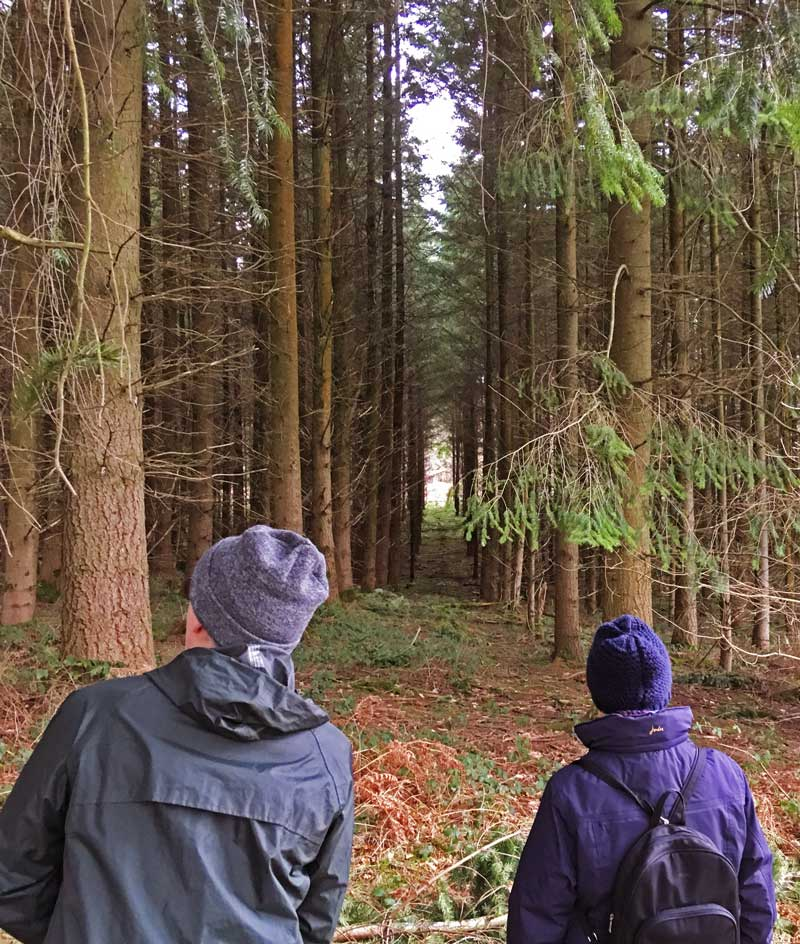 Walkers inspect a Forest plantation near Bream