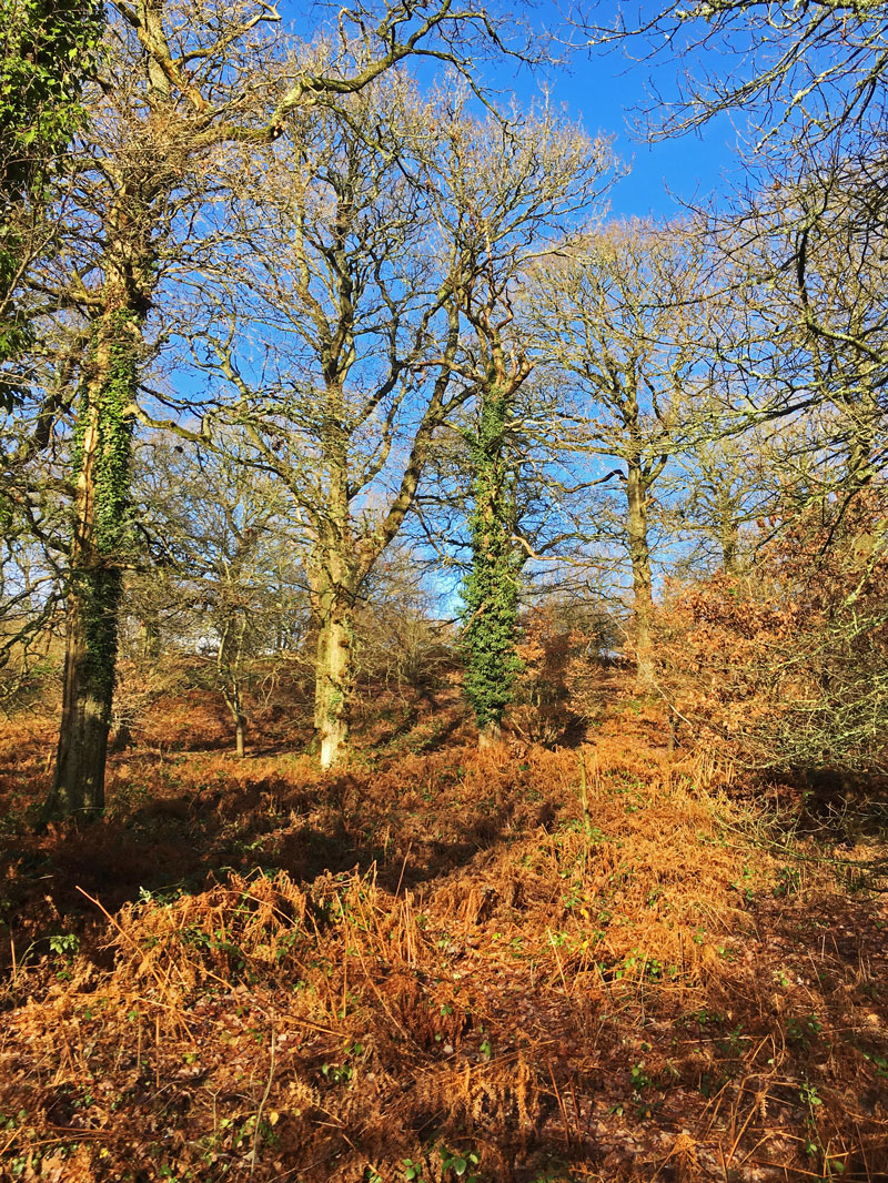 A photo of Trees in winter sunlight at Shutcastle