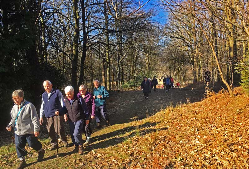 A photo of walkers in Churchill Plantation near Parkend.