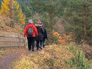 Walkers experience the late Autumn colours in the Forest of Dean